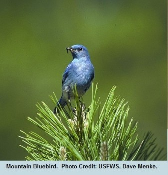 03 Equinox Mountain Bluebird