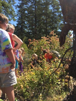 Sandy Compton shows participants in a Community Kids Hike an elk skeleton discovered along the trail.