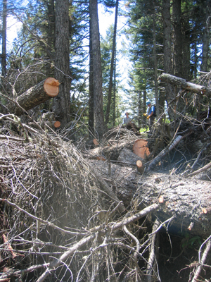 """It took two sawyers and three """"swampers"""" an hour and 15 minutes to clear the biggest mess on the trail."""