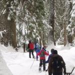 Cedars Snowshoe 972