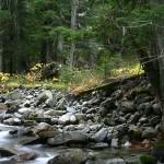 Ross Cedars Creek