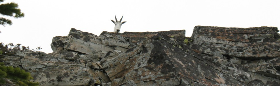 Flip-flops and Mountain Goats