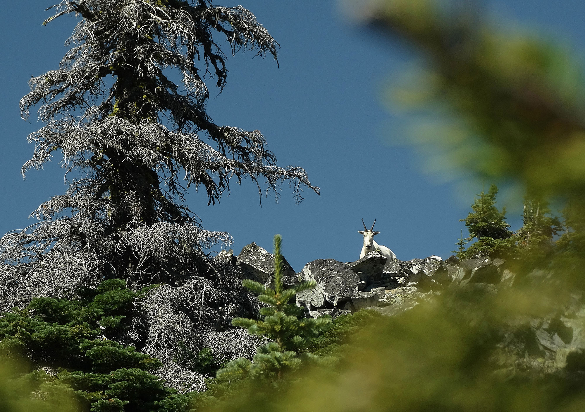 Scotchman Peak Trail Ambassadors