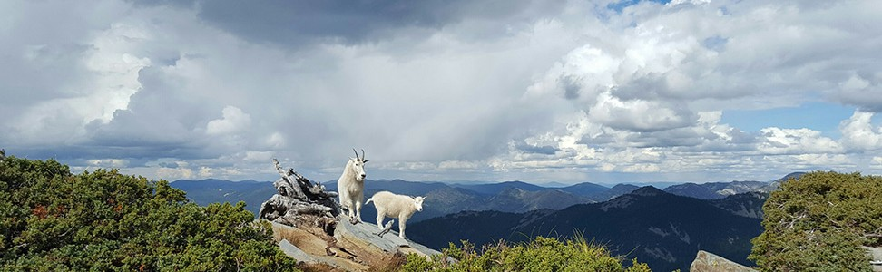 We're baaaaack:  FSPW's goat education program continues