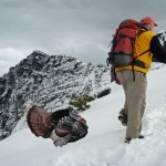 Two Turkeys Climb Scotchman Peak in 2013