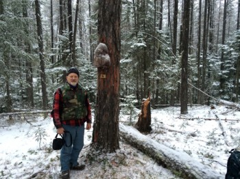 WW-rod by tree
