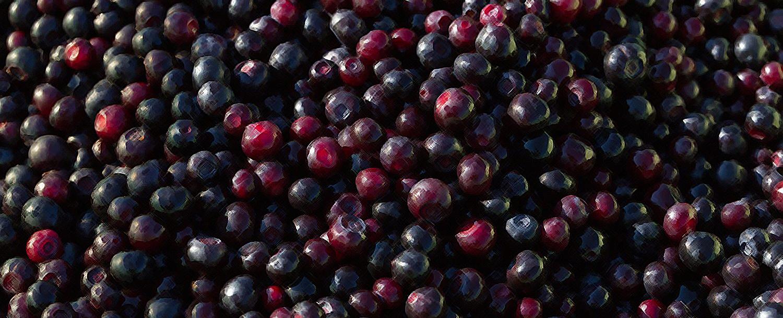 Huckleberry Festival celebrates the West's famous fruit