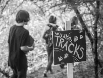 tracks board