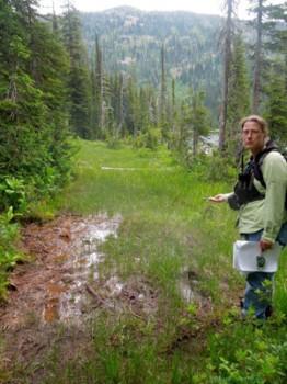 wetland destruction